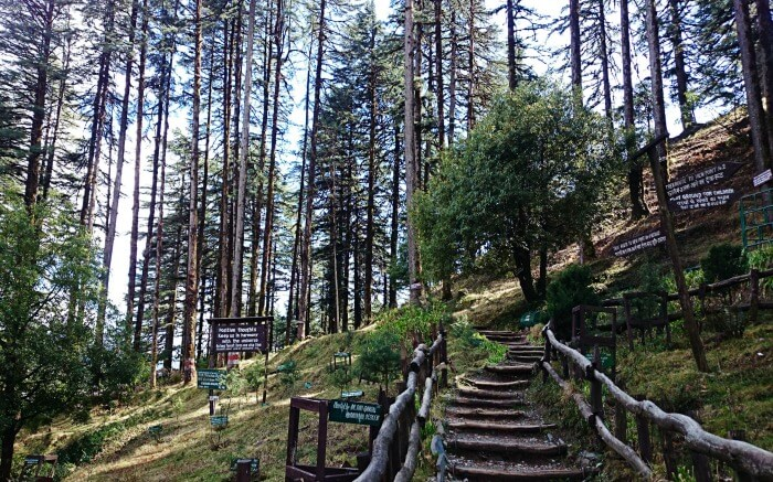 travelogged-26-places-to-visit-dhanaulti-eco-parks_image