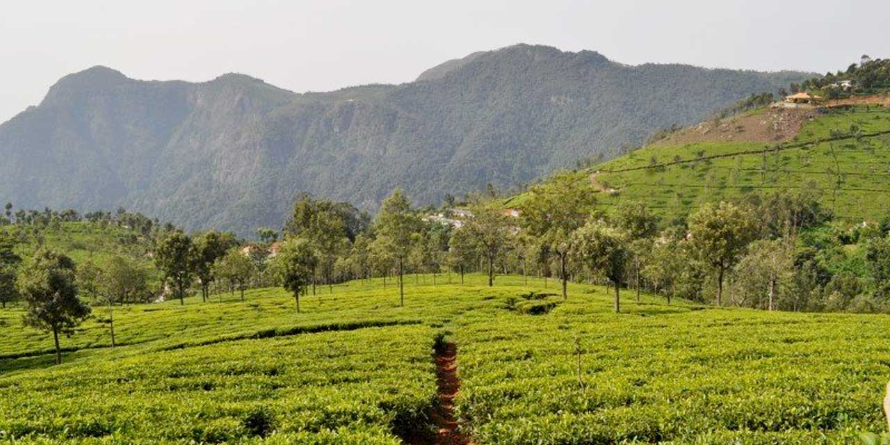 places-visit-coonoor-cannings-seat_image