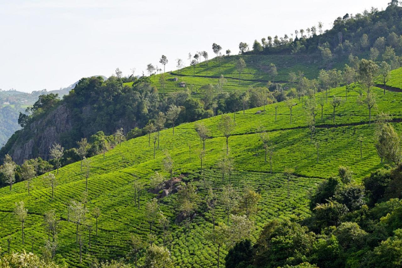 travelogged-18-things-do-ooty-tea-park_image