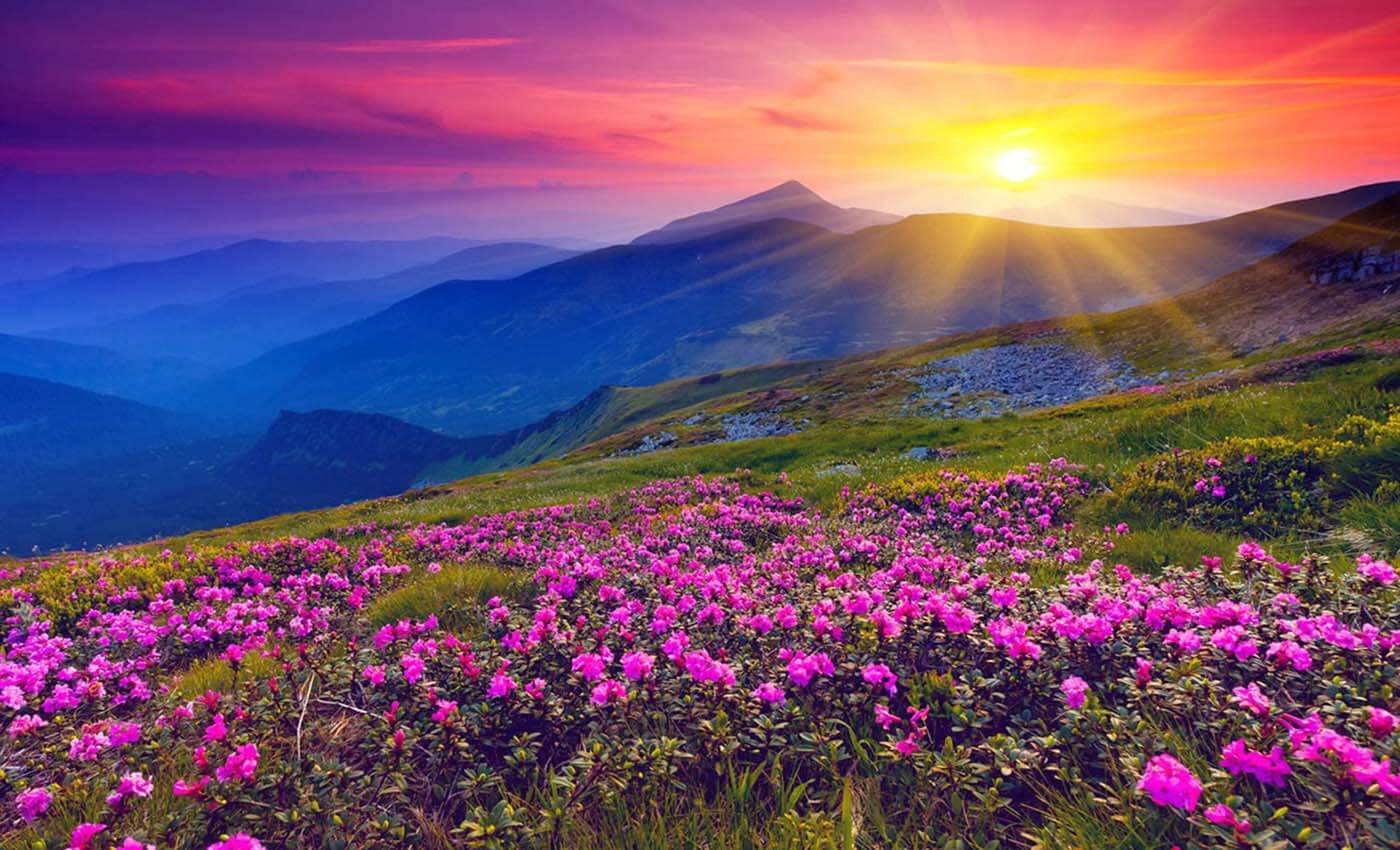 most-instagrammable-destinations-india-Valley-of-Flowers-image