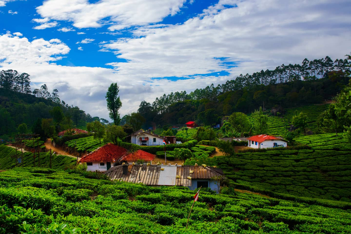 most-instagrammable-destinations-india-munnar-image