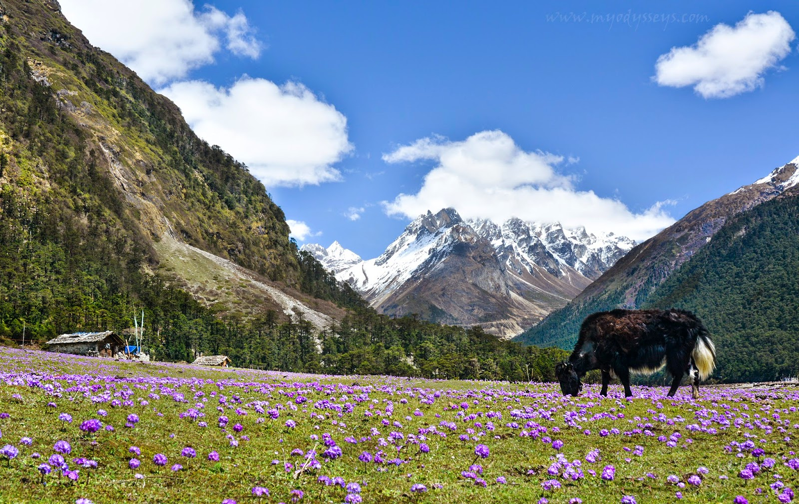 best-places-visit-spring-india-Yumthang_Valley