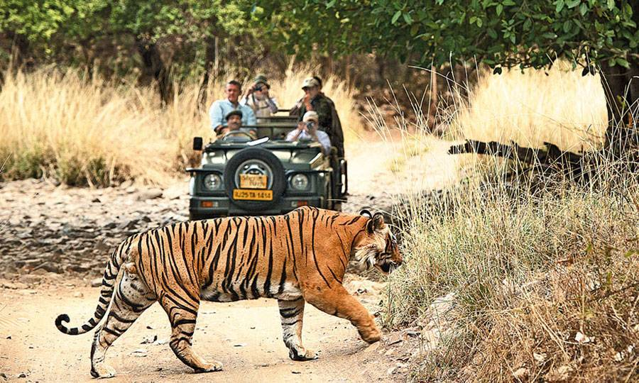 sher bagh-ranthambore_image