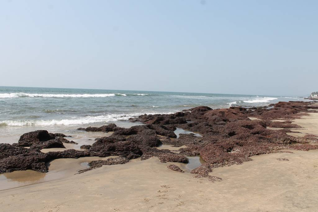 morjim-beach-best-places-to-visit-in-goa_image