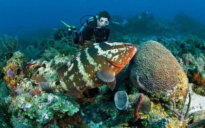 coral-shark-reef-scubadiving-india_image