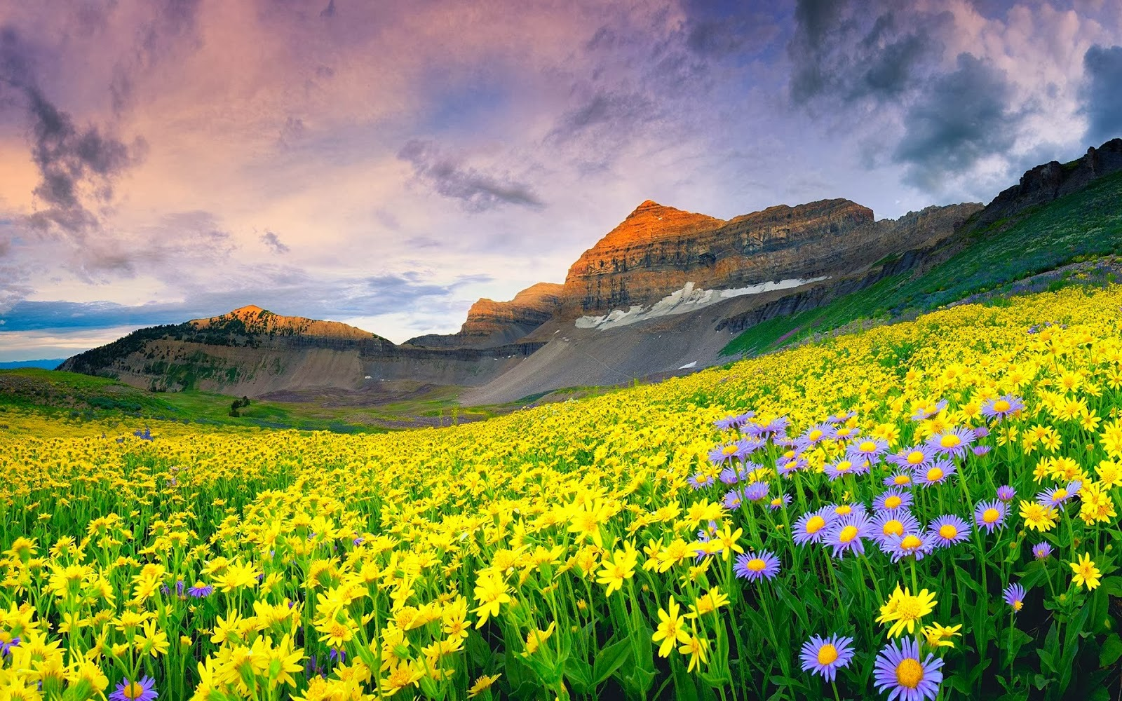 best-thrilling-activities-india-valley-of-flowers_image