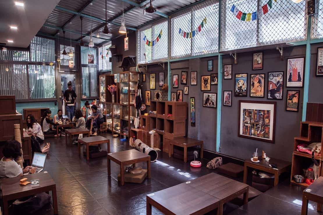 Date With Doggo: 16 Best Pet-Friendly Cafes in Mumbai For