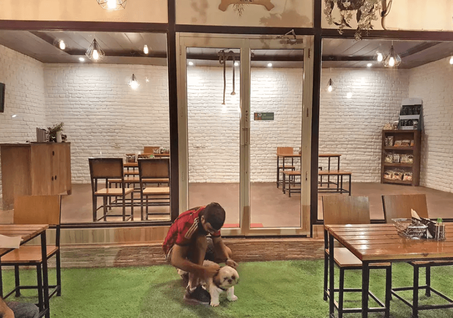 pet_friendly_cafes_gurgaon_fur_ball_story_image