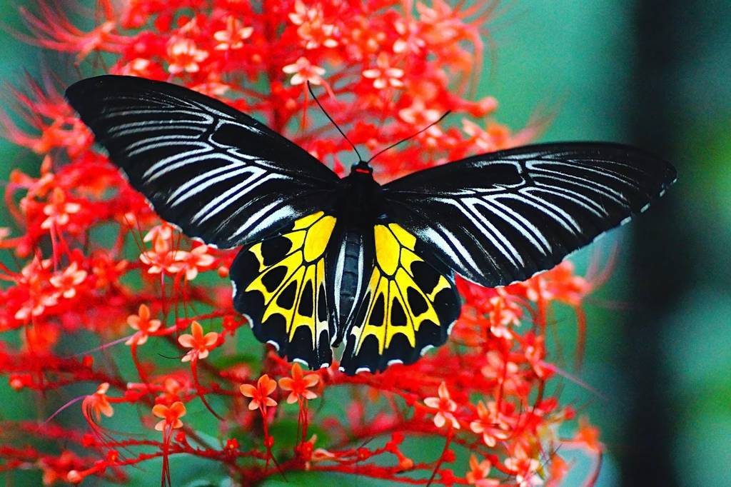 butterfly-conservatory-goa_image