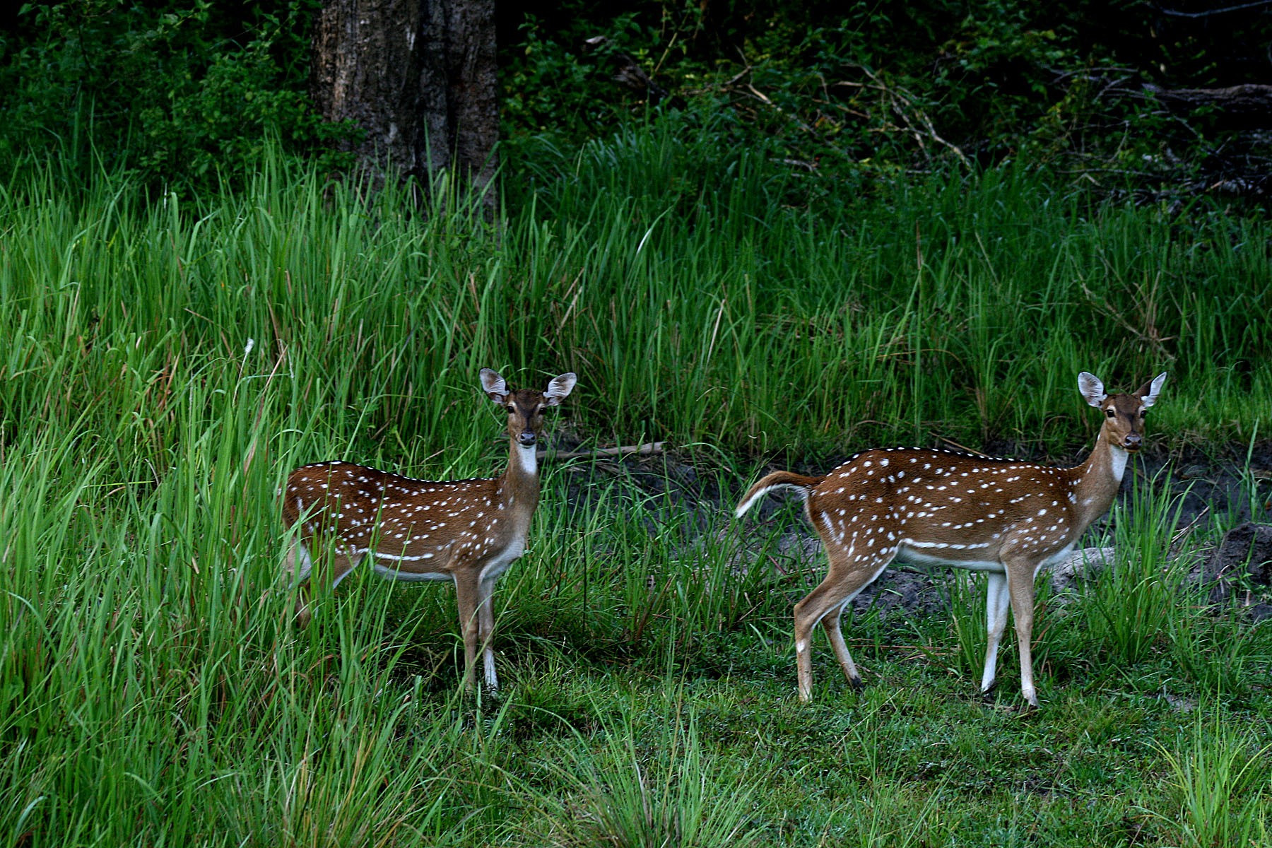 travelogged-12-things-to-do-coorg-nagarhole-national-park_image