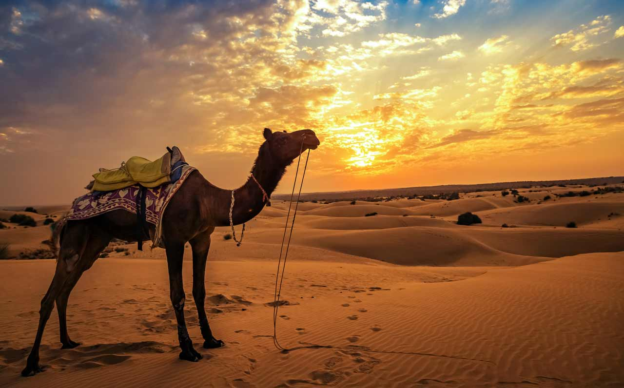 things-to-do-in-jaisalmer-sand-dunes_image